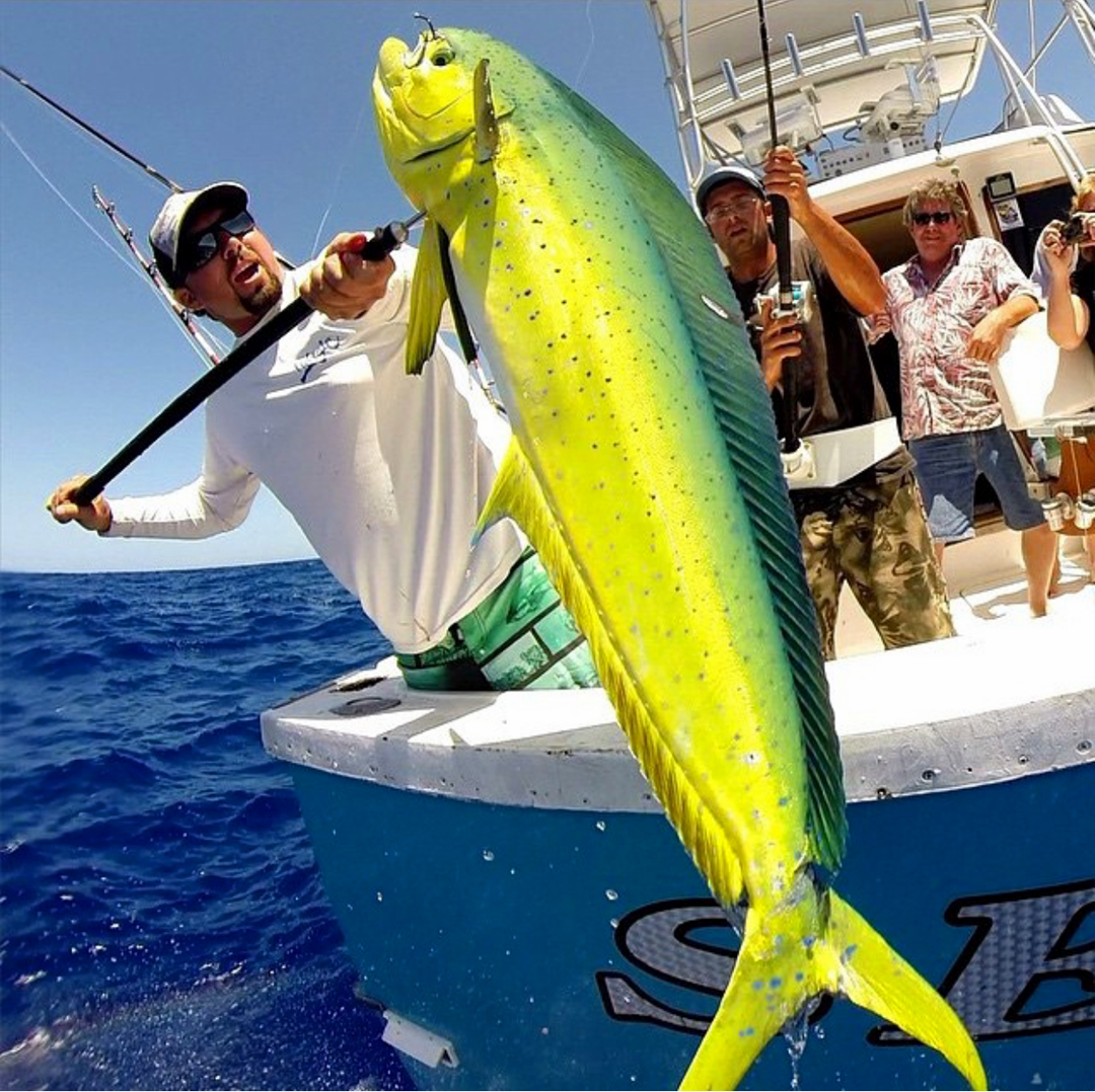 Hawaii oahu north shore fishing chupu charter for Shore fishing oahu