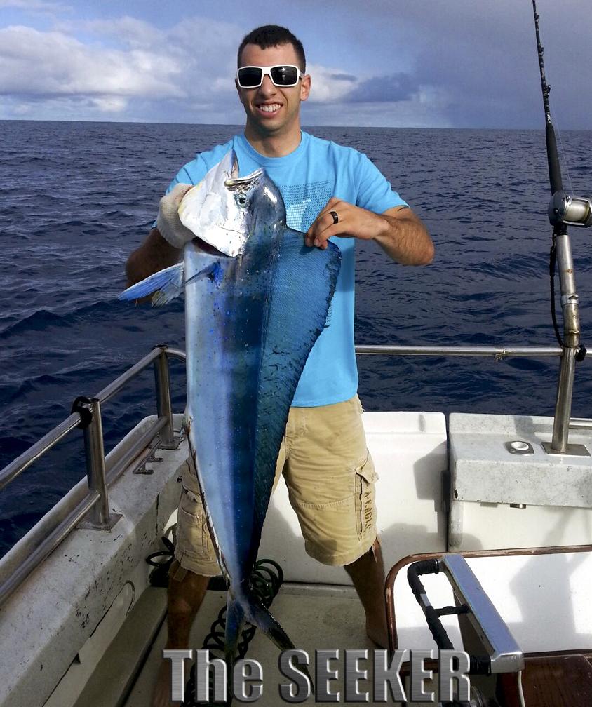 Natural blue color of Mahi Mahi