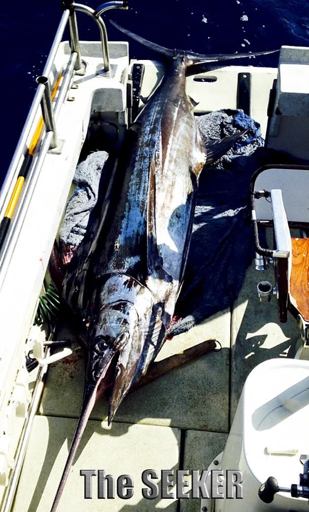 Marlin on The SEEKER