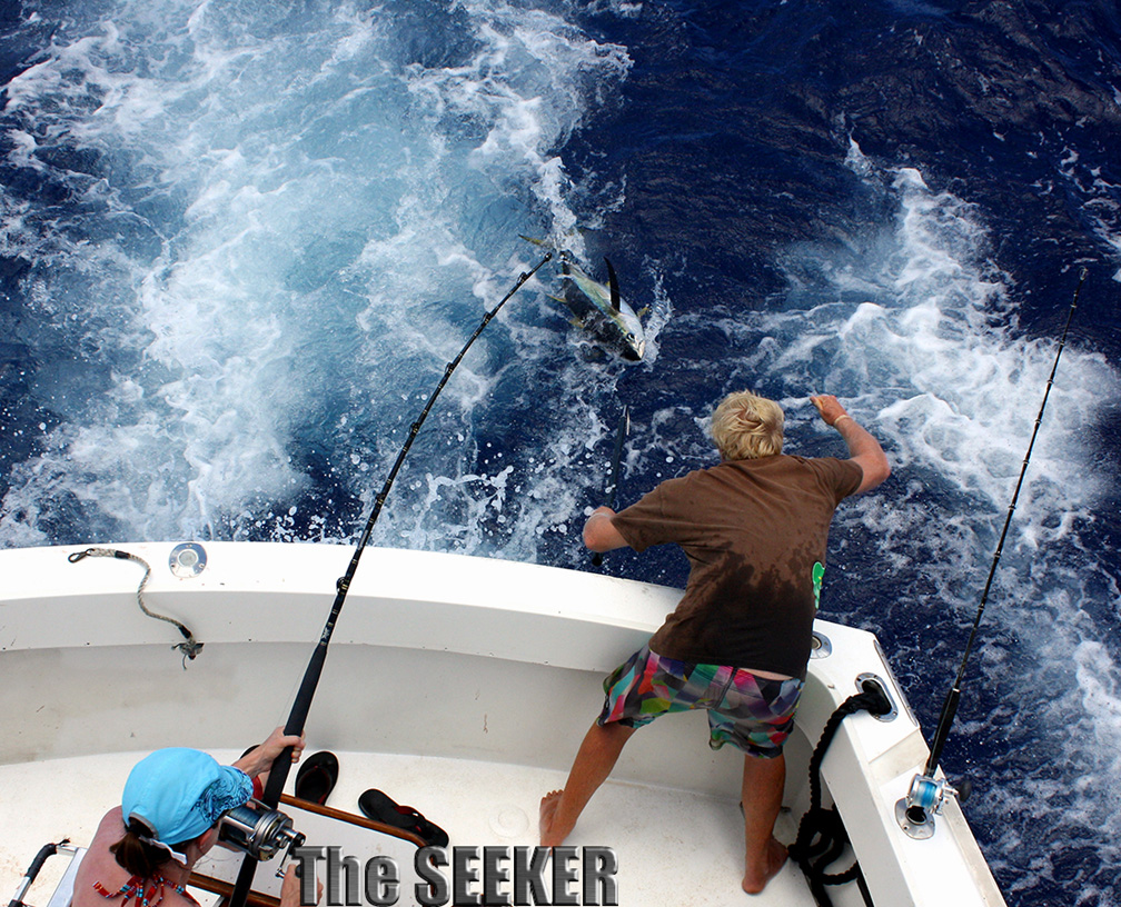 Ahi Yellow Fin Tuna being landed oboard The Seeker by crewman Sea Whalen