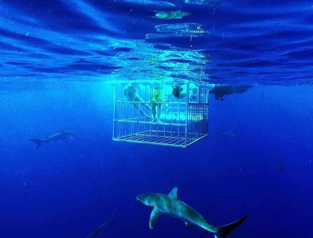 Shark Cage and Sharks